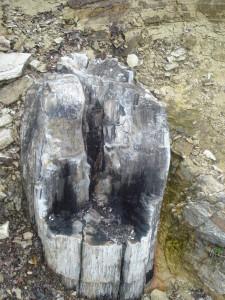 vkamenenata gora пътеводител източни родопи