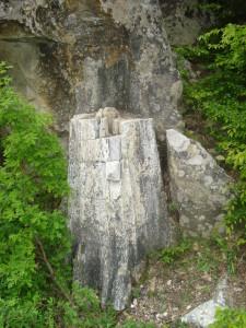 пътеводител източни родопи darvo v kamennata gora